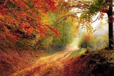 Straße Wald